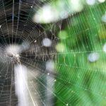 蜘蛛の巣は有害じゃないの?クモの巣の人体への影響まとめ!