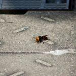 危険!スズメバチに刺されないために注意するべきこと8つ!